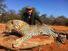 Leopard hunt trophy