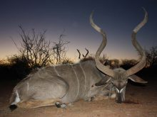 Kudu-hunting