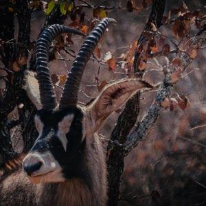 Bandur Hunting Safaris - Trophy Hunting