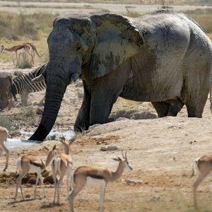 Bandur Hunting Safaris - Waterhole