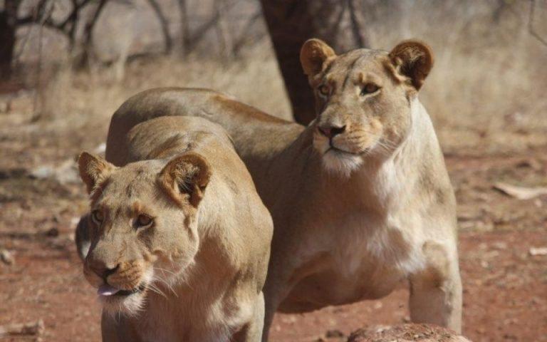Bandur Hunting Safaris - Wildlife Safari